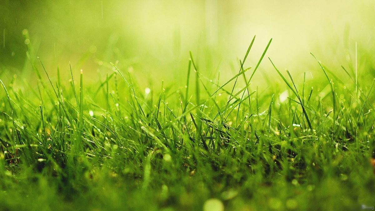 [Livre] Un parfum d'herbe coupée par Nicolas Delesalle