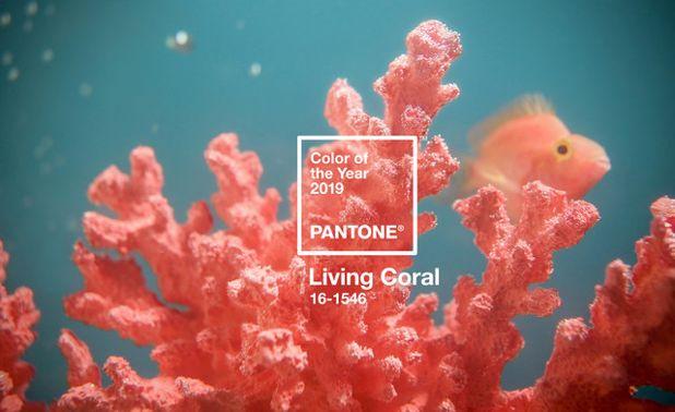 Déco : voyez la vie en Living Coral